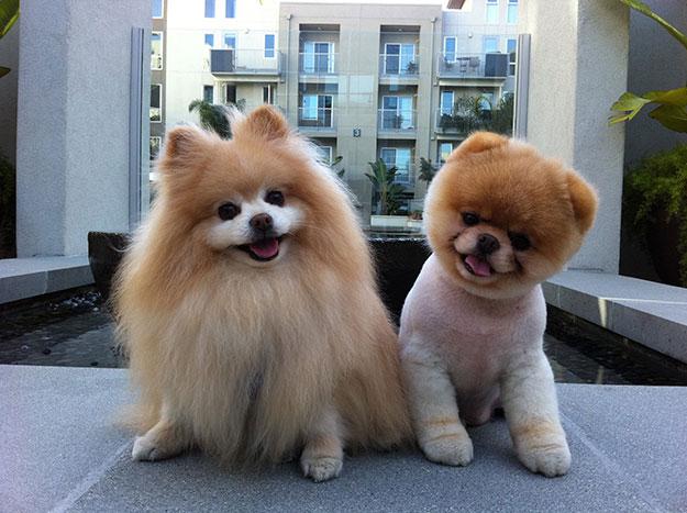 Couple-Dog-Pet