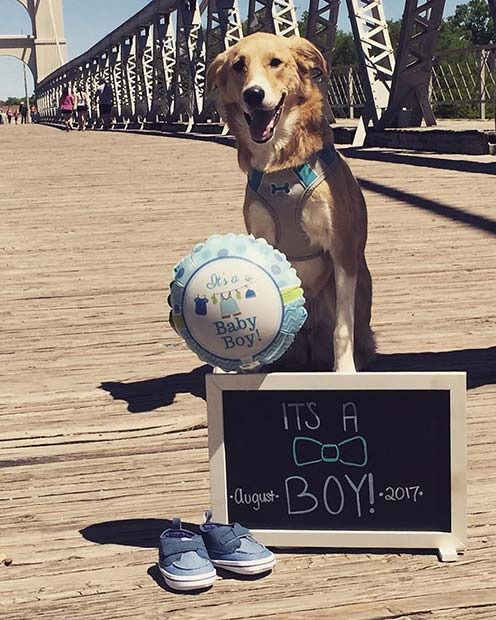 Gender Reveal Photo with Pet