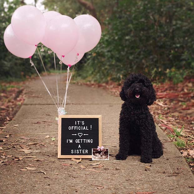 21 Christmas Pregnancy Announcement Ideas