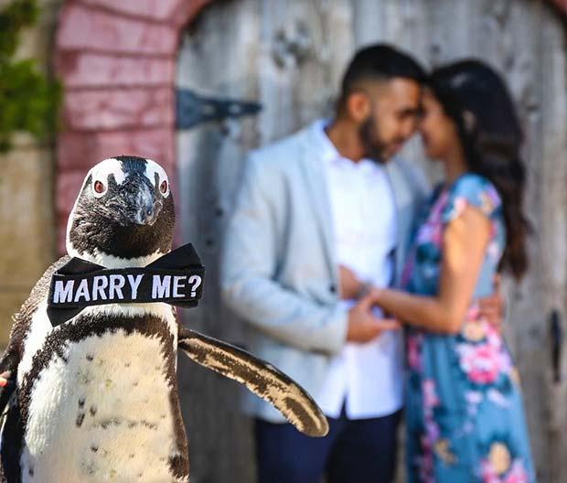 ZOO Wedding Proposal Idea