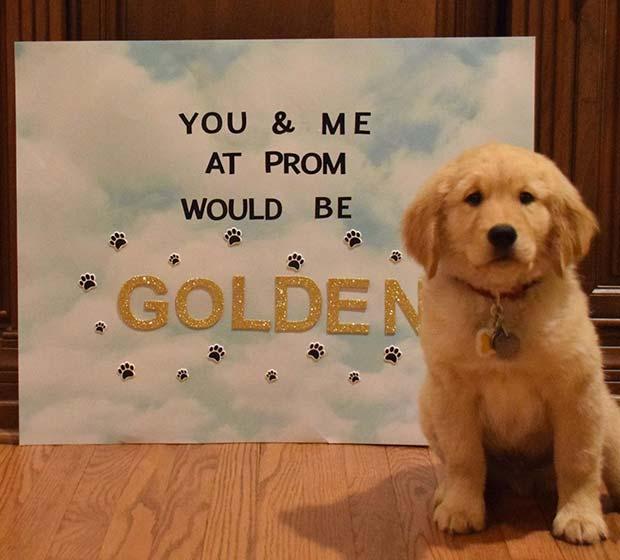 Adorable Golden Retriever Idea