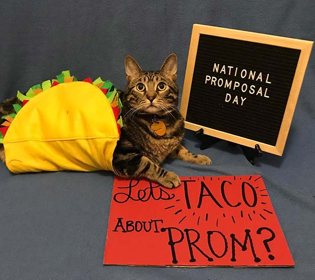 Let's Taco About Prom